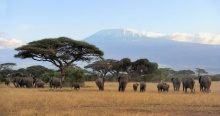 Using Intel AI to Protect Endangered Animals In Serengeti